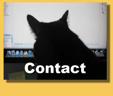 kitty cat contact